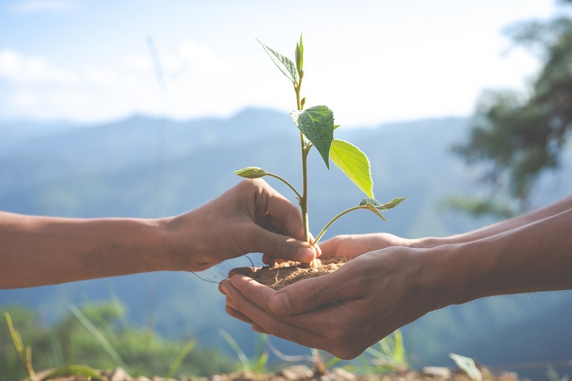 planter_des_arbres