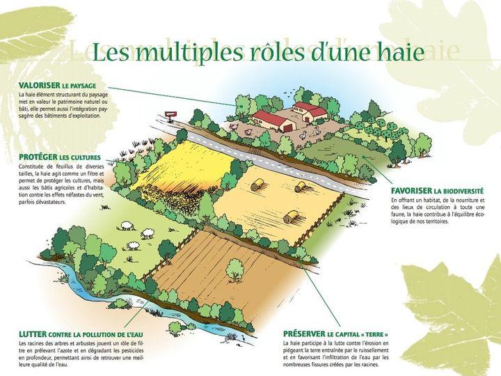 role_des_haies